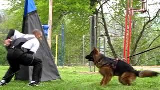 German Shepherd Bark And Bite Training