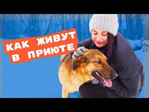 Вопрос: Как организовать некоммерческую службу помощи животным?