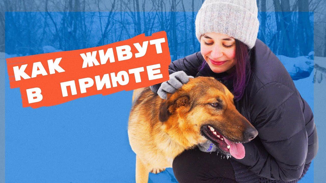 Бездомные собаки и кошки: как помочь приютам