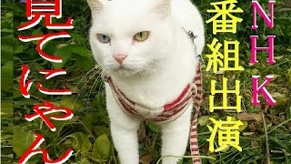 【会津若松】NHK総合に私と太陽(猫)が出演します!!番組名:やるなぁ~!投稿DO画 (=^・・^=)(^_-)-☆ 2016年9/20 【猫かわいい】【会津若松市】