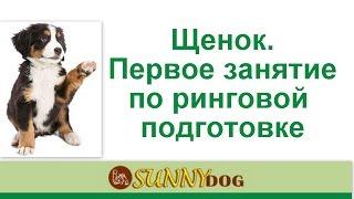 Ринговая дрессировка  Хендлинг  первое занятие  щенка  тоса ину