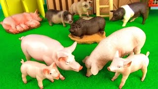 Farm Animals Kids Toys   Fun Facts about Pigs in English   Funny ending!