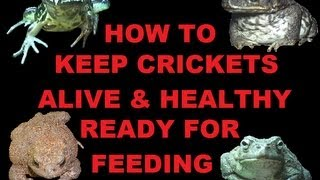 How to keep crickets alive & healthy ready for feeding