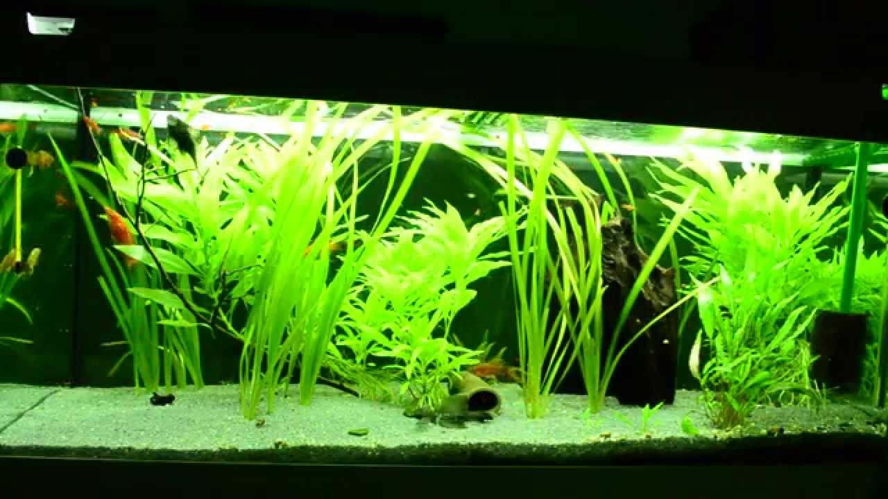 mein aquarium 240 liter youtube. Black Bedroom Furniture Sets. Home Design Ideas