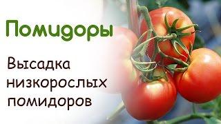 Высадка низкорослых помидоров в открытый грунт. Преимущества способа посадки томатов(Покажу как удобно и выгодно высадить помидоры в открытый грунт. Расскажу про уход за томатами, про простой..., 2015-05-11T13:23:05.000Z)
