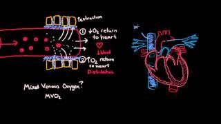 Shock Pathophysiology Part 1