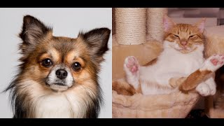 🐶CUTE baby animals Videos Compilation😻cutest moment of the animals life #7