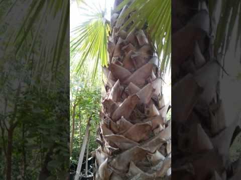 Palm Tree Nursery Growers 0582662554