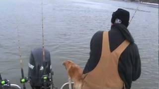 biggest catfish ever caught on film!