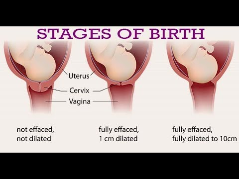 Stages Of Birth- Shecare