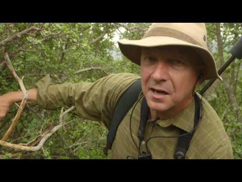 Matswani Kudu Hunt