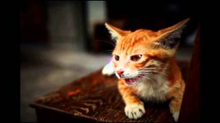 Good Guide Cat Health Secrets for Your Favorite; Cat Behavior Tips, Litter Training Cats
