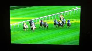 Black Caviar 25th Win Darley Royal Randwick