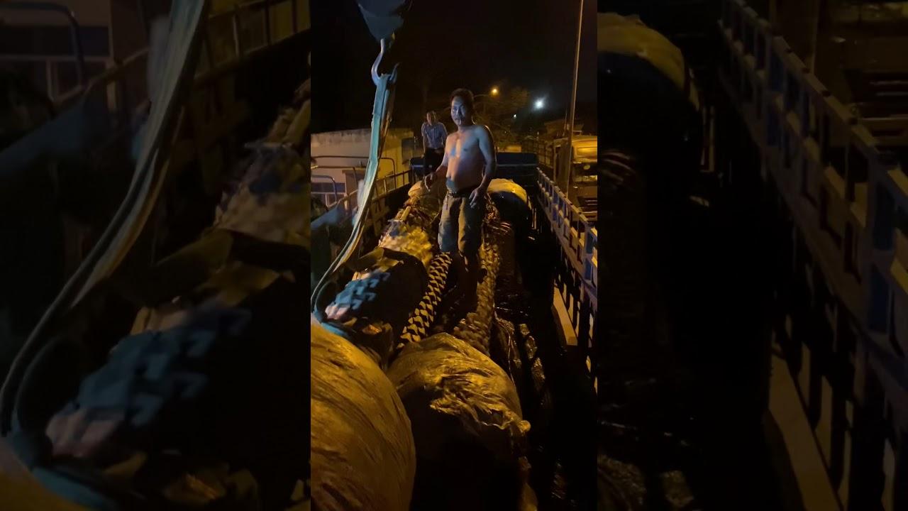 xếp xe cây chà là Thái Lan – 0909364007