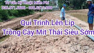 Qui Trình Lên Líp | Trồng Cây Mít Thái Siêu Sớm.