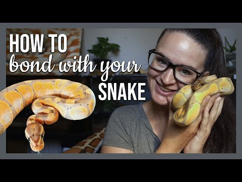 HOW TO BOND WITH YOUR SNAKE