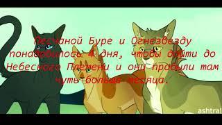 Коты Воители Факты часть 2