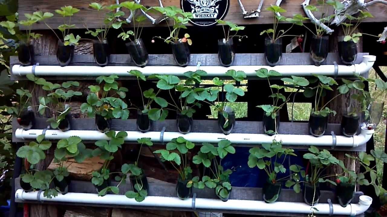 Vertical Strawberry Garden Youtube