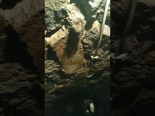 Вухань звичайний у підвалі Казкового будинку (м. Берегово)