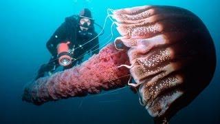 Кто живет на дне океана? Животные убийцы.
