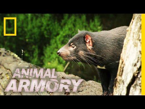 You Smelly Devil! | Animal Armory