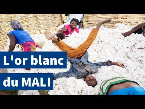 Mali : voyage au pays de l'or blanc | AFP Reportage
