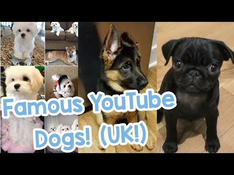 Famous YouTubers Dogs UK! Zoella & Alfie Deyes/Comedy Shorts Gamer/The Sacconjolys!