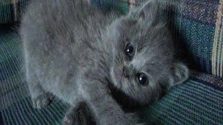 Купили прикольного котенка, веселун еще тот :-))