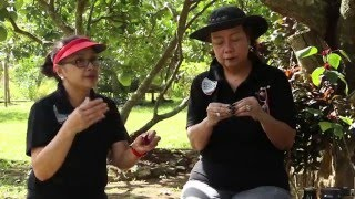 OA AKO Telemag #24 ROSELLE The Ruby of the Plant Kingdom