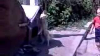как повесить собаку.mp4