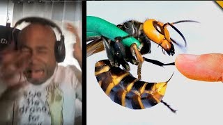 HE REALLY DID IT!!!! STUNG by a GIANT HORNET Reaction!