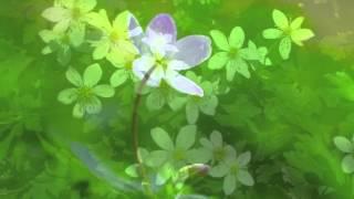 川中美幸さんの「二輪草」を唄わせていただきました。 作詞:水木かおる...