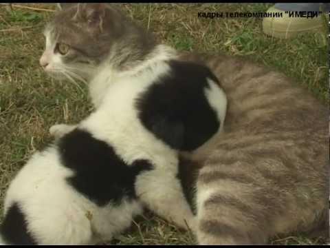 Кошка родила щенка