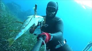 Ψαροντούφεκο στην Σάμο-Σαργοί και άλλα άσπρα ψάρια - Spearfishing Samos 2018