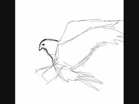 Cmo dibujar un halcn  How to draw a falcon  YouTube