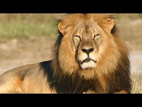 África-do-sul-selvagem---documentários-de-animais-hd