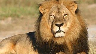 África do Sul Selvagem - documentários de animais HD