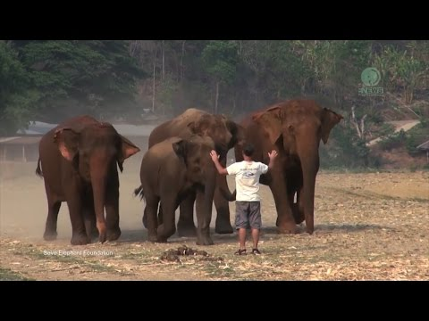 Bonding with Rescued Elephants