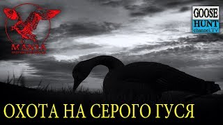 Охота на серого гуся..Декабрь.Greylag goose hunting