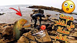 مغامرة شيقة هجمت علي أخطر سمكة بالعالم  ثعبان البحر السام 😱