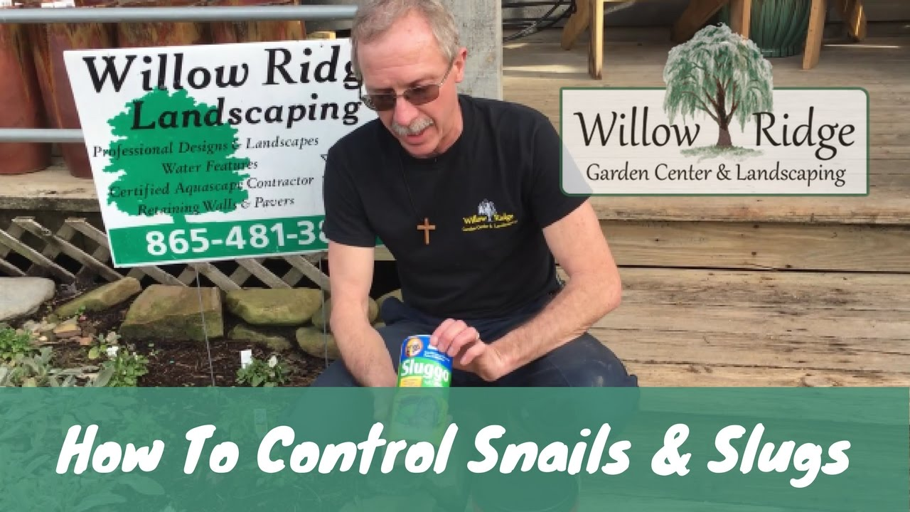 How To Get Rid Of Snails And Slugs In Your Garden Youtube