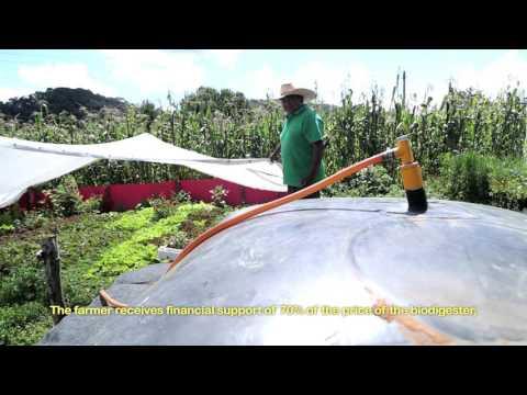 Biodigestores- Biol- Fertilizante orgánico- Agricultura orgánica