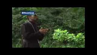 New Orthodox Mezmur Afaan Oromo Simaalee Gooftaa Youtube