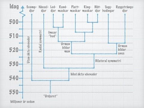 Djurens systematik – Den kambriska explosionen