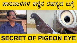 ಪಾರಿವಾಳಗಳ ಕಣ್ಣಿನ ರಹಸ್ಯದ ಬಗ್ಗೆ | Secret of pigeon eye