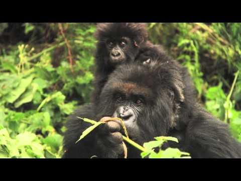 Rwanda Trip to see the Gorrillas