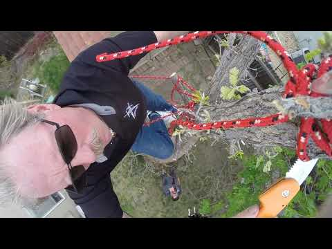 GoPro Behind the Scenes Tree Falling with a Hand Saw Footage