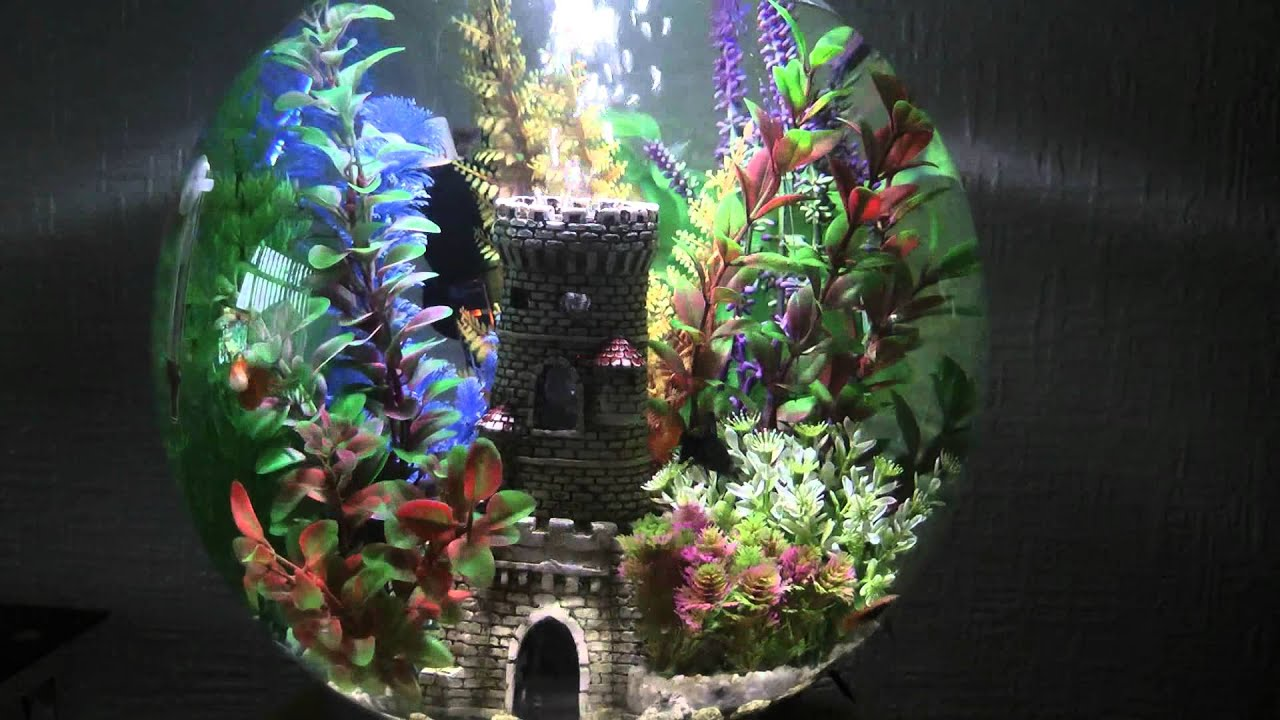 & BIORB FISH TANK - YouTube