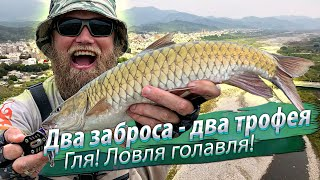 Чуть не вырвало спиннинг из рук Рыбалка на горной реке Местный голавль хищник масир