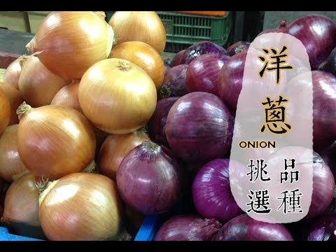 【春】洋蔥如何挑選與保存才好吃?